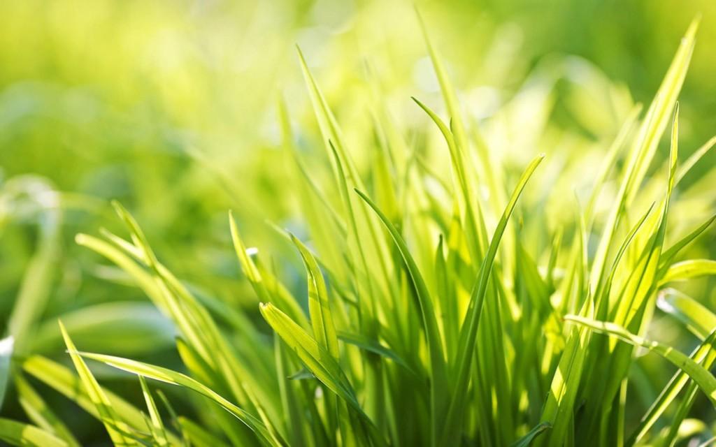 Sun-Grass-1800x2880